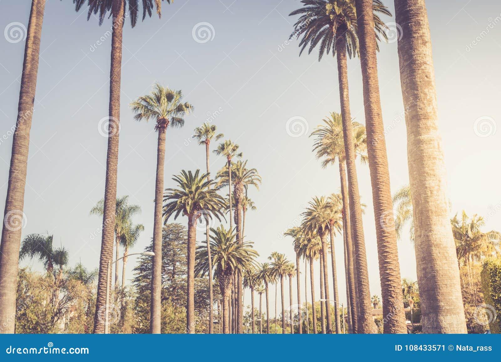 Gömma i handflatan av Beverly Hills