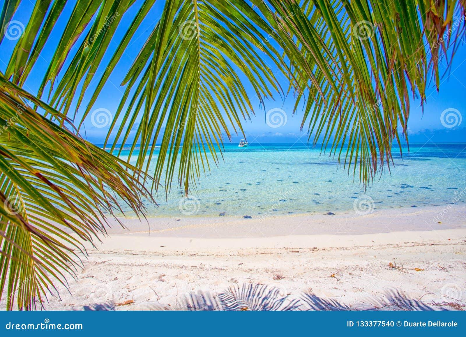 Gömma i handflatan blad och det karibiska havet på en tropisk ö med den härliga stranden och sand