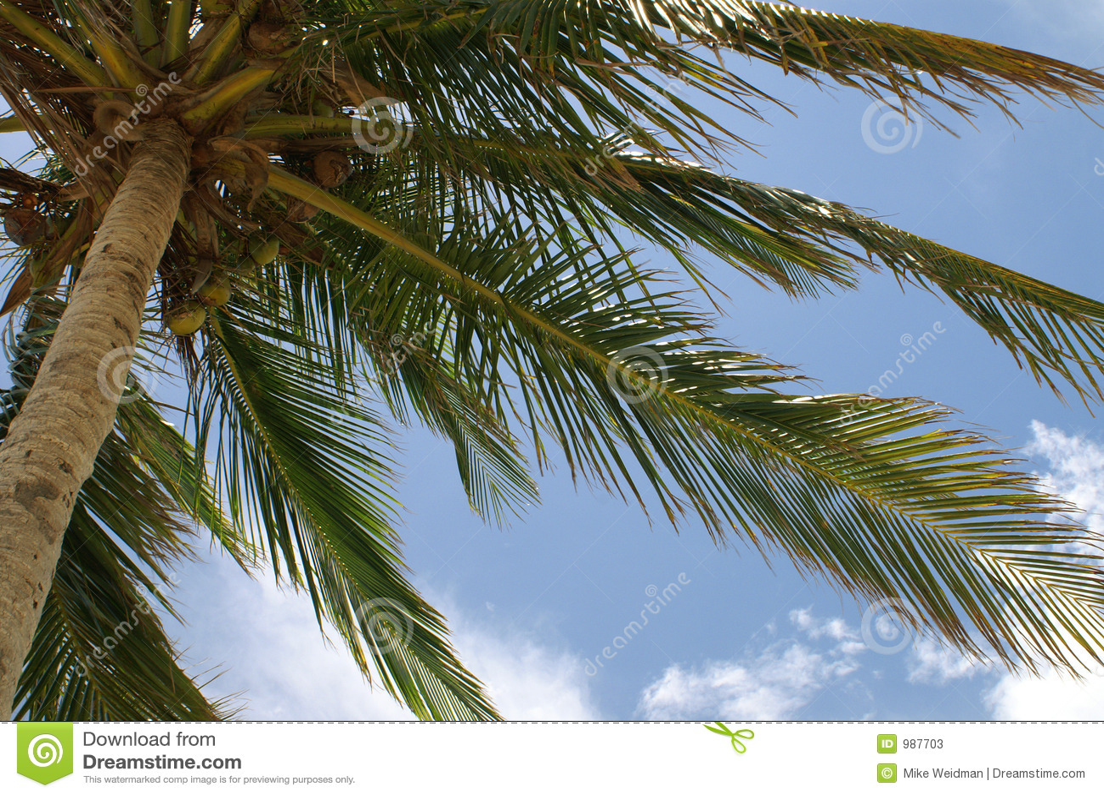 Gömma i handflatan den pictoral treen