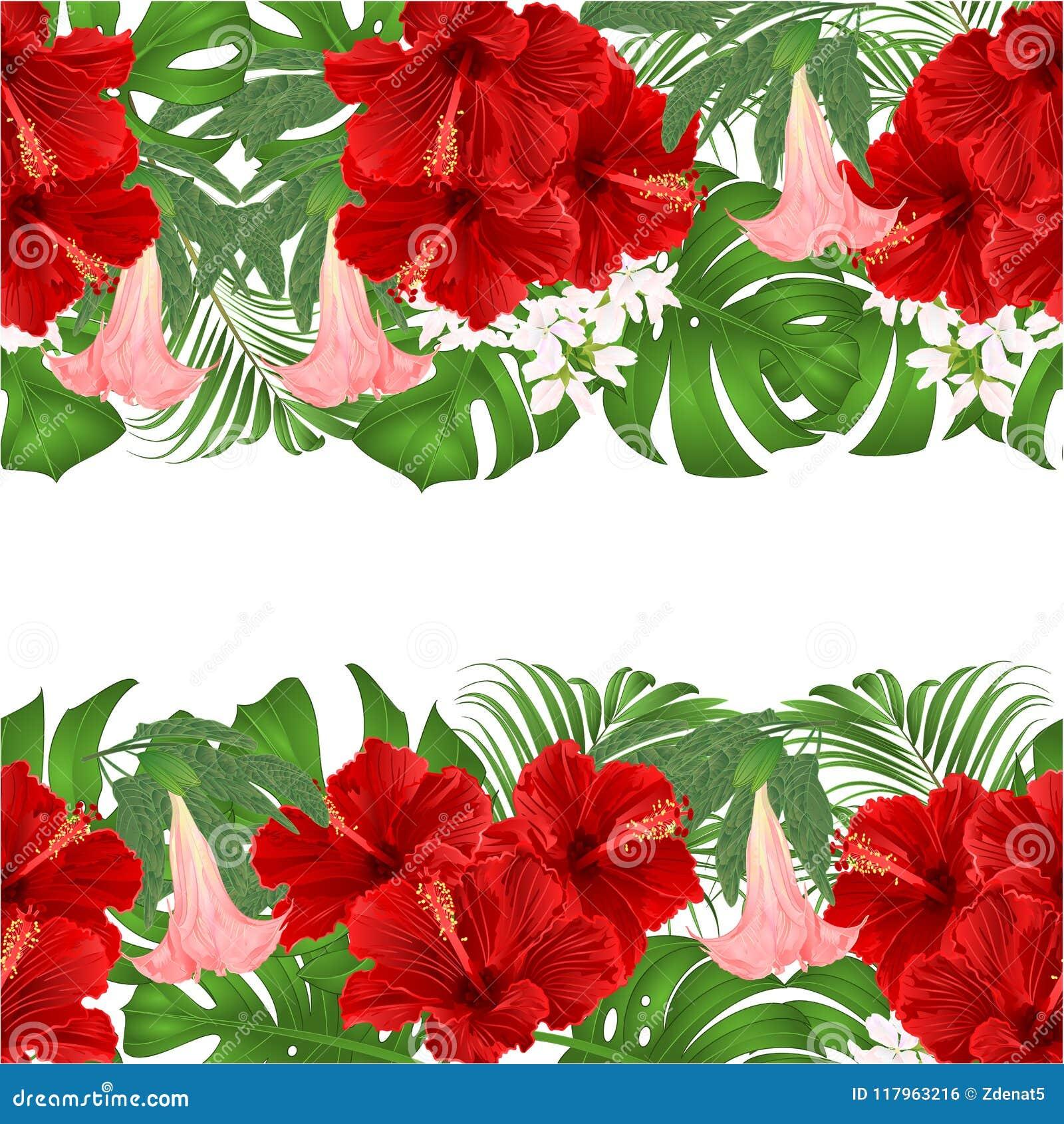 Gömma i handflatan horisontalbuketten för blom- bakgrund för gränsen sömlös med blom- ordning för tropiska blommor, med den röda