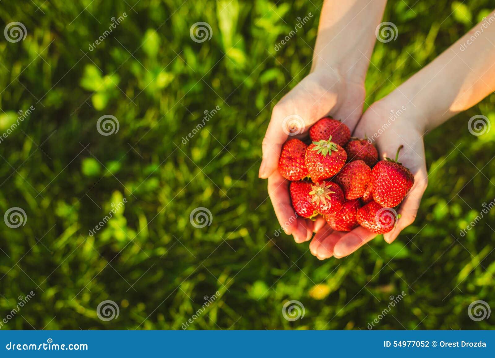 Gömma i handflatan mycket av jordgubbar