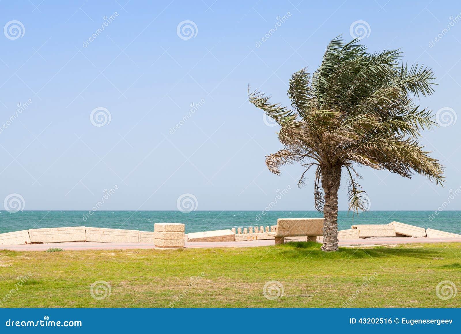 Download Gömma I Handflatan Och Bänken På Kust Av Persiska Viken, Saudiarabien Arkivfoto - Bild av vatten, kust: 43202516