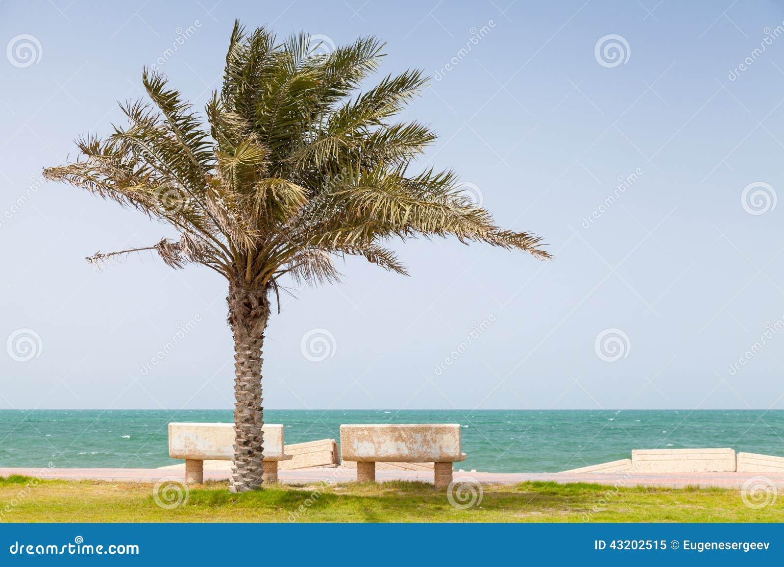 Download Gömma I Handflatan På Kust Av Persiska Viken, Saudiarabien Fotografering för Bildbyråer - Bild av vatten, natur: 43202515