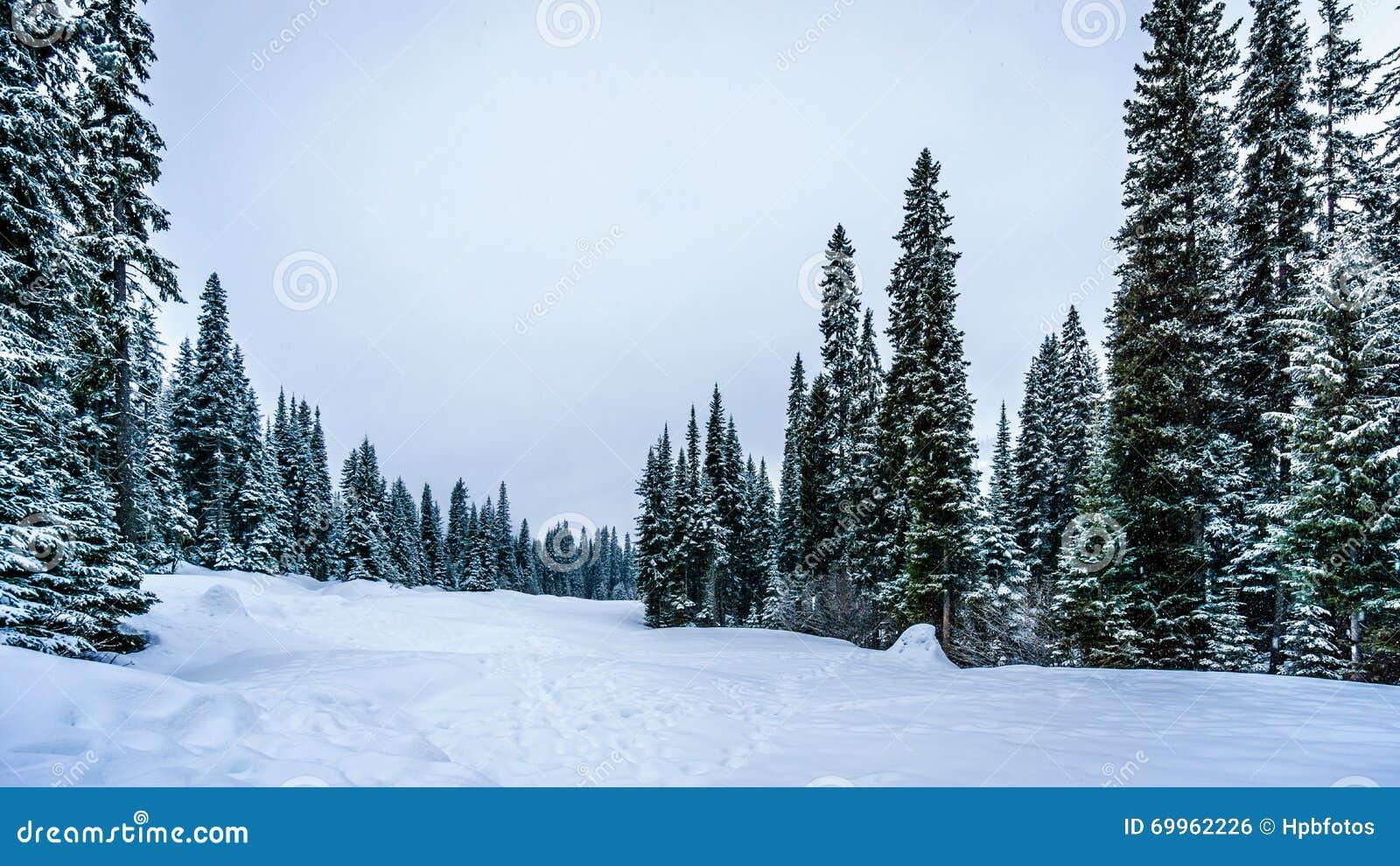 Głęboka śnieg paczka w lesie