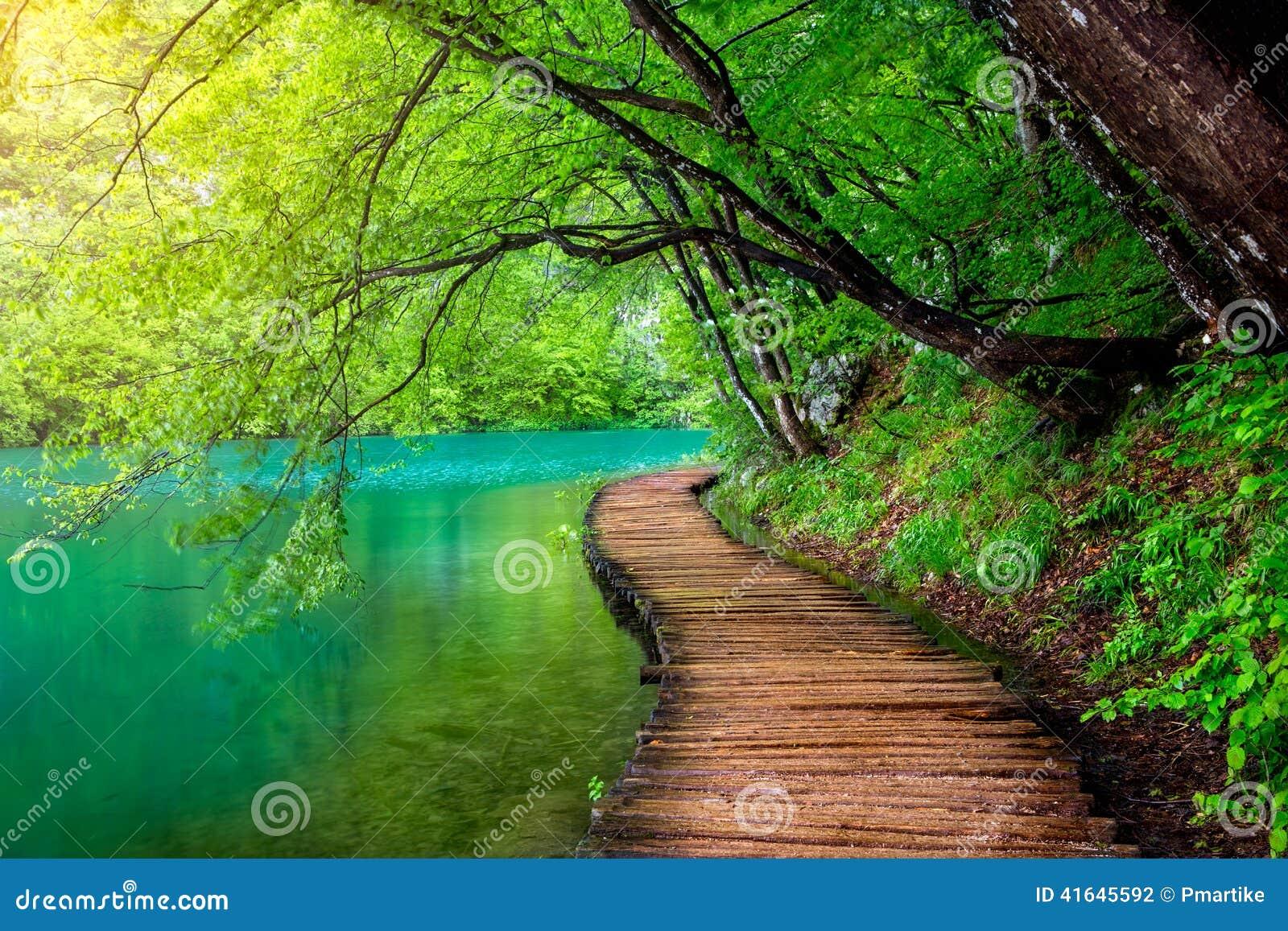 Głęboki lasowy strumień z kryształem - jasna woda w świetle słonecznym