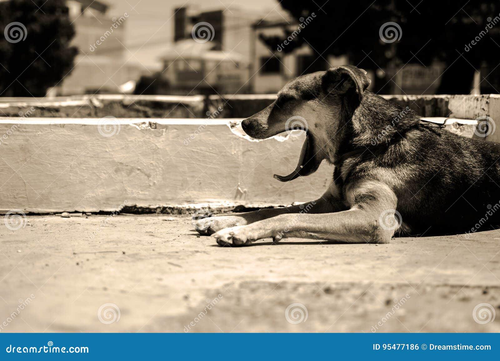 Głodny i śpiący pies