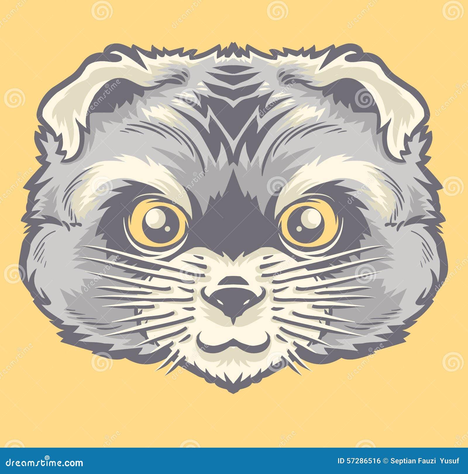 Głowa Perski kot