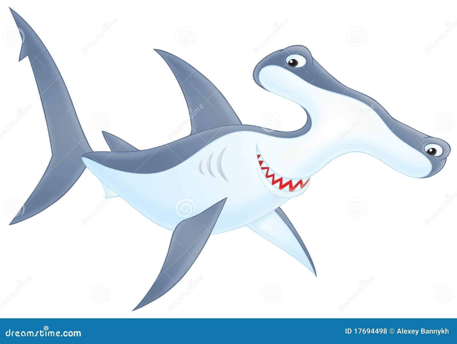 Głowiasty młota rekin