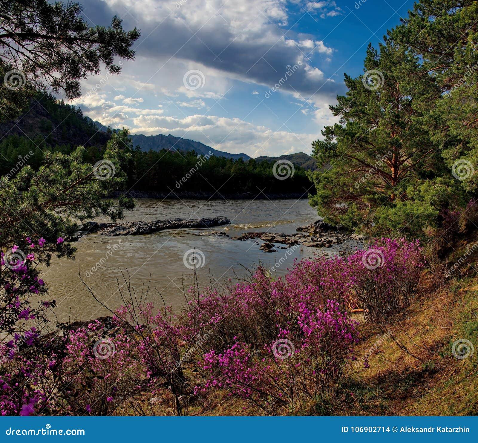 Główny wiosna festiwal w Altai górach