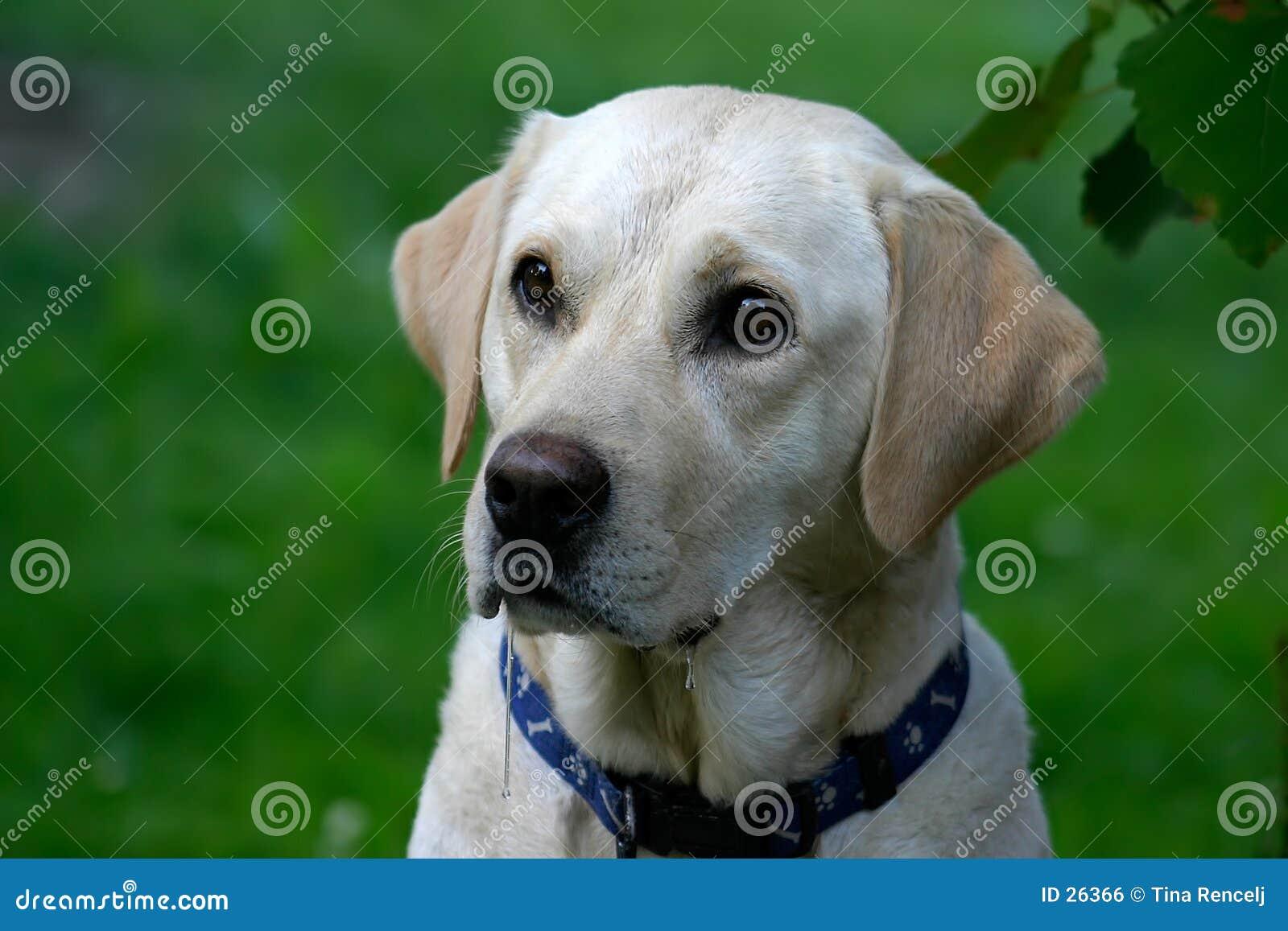 Download Głodny pies zdjęcie stock. Obraz złożonej z invalids, ciucia - 26366