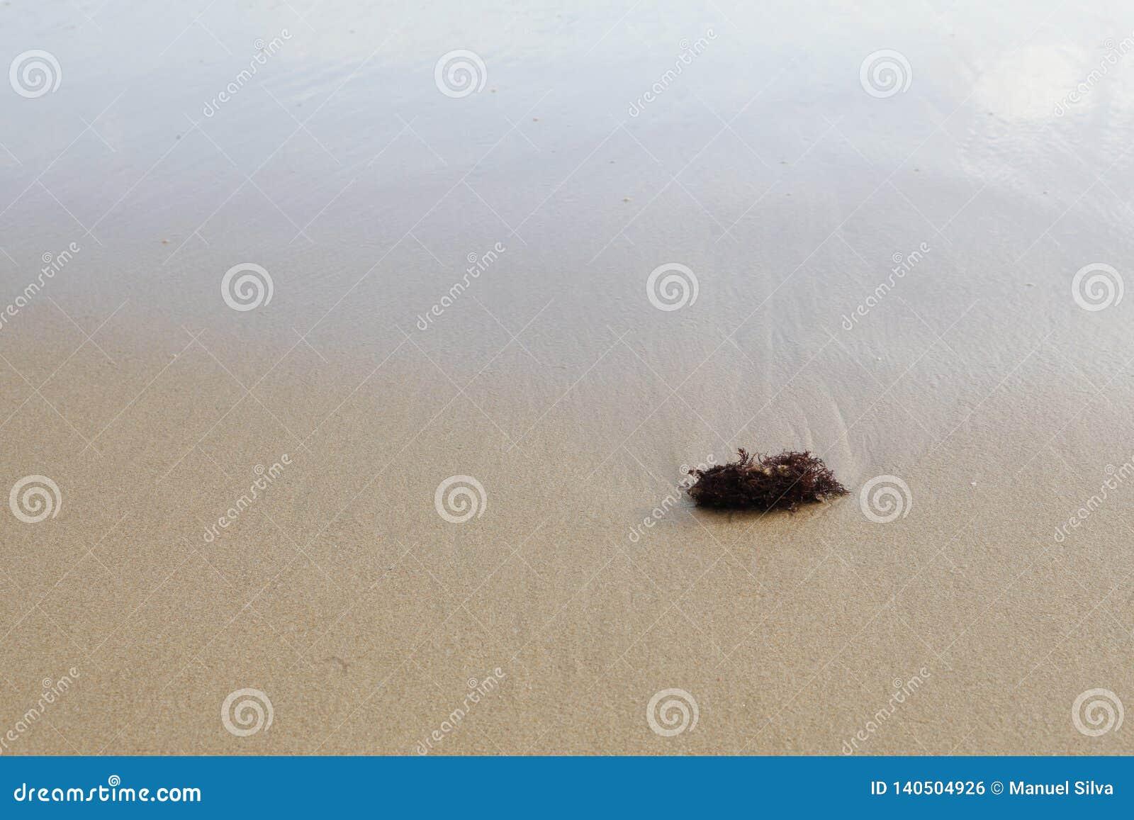 Gałęzatka na piaskowatym dnie
