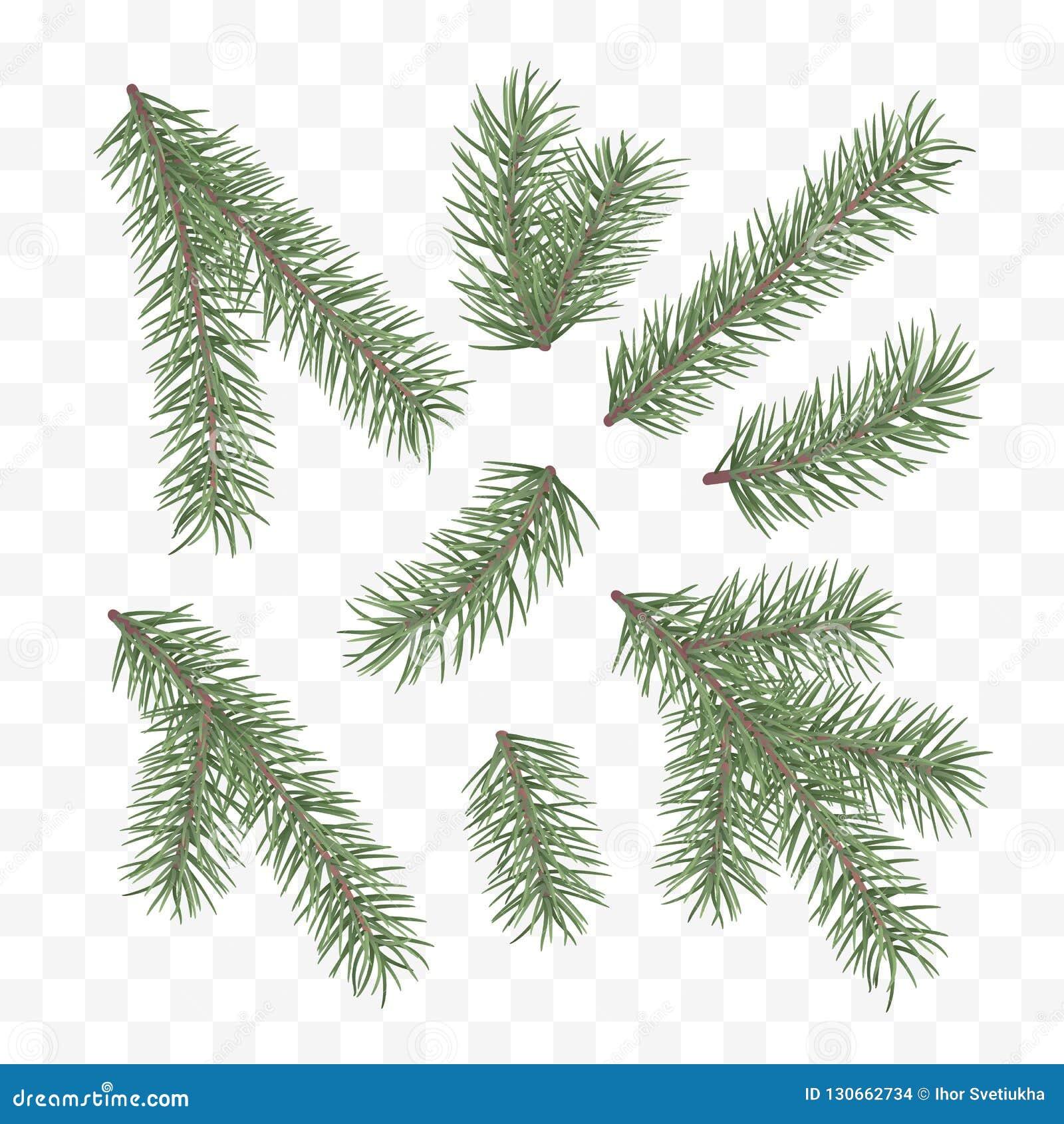 Gałąź jodły zieleń Wakacyjny wystroju element Set choinki gałąź Conifer gałęziasty symbol boże narodzenia i nowy rok