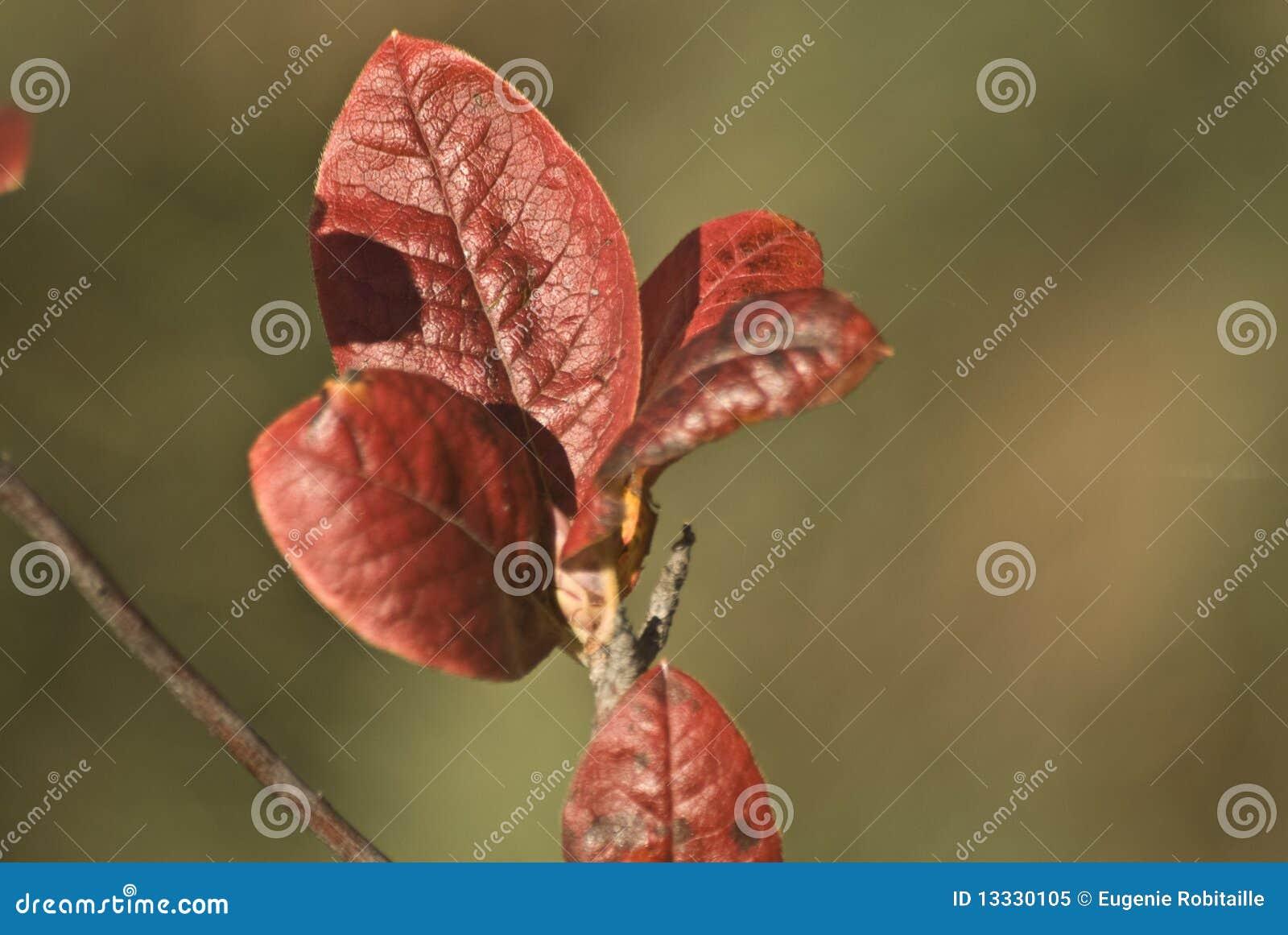 Gałąź liść