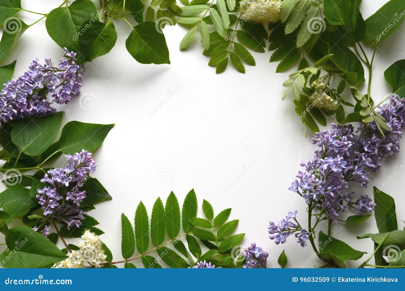 Gałąź lily i halny popiół