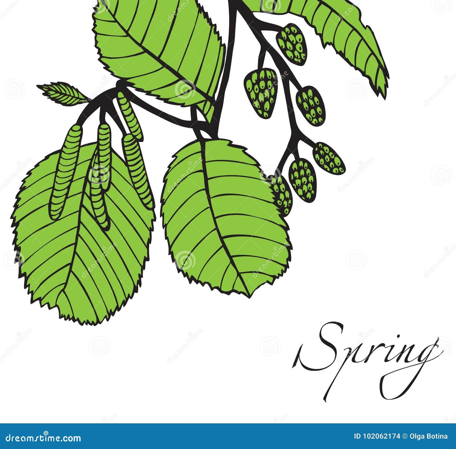 Gałąź pączkuje wiosna drzewa