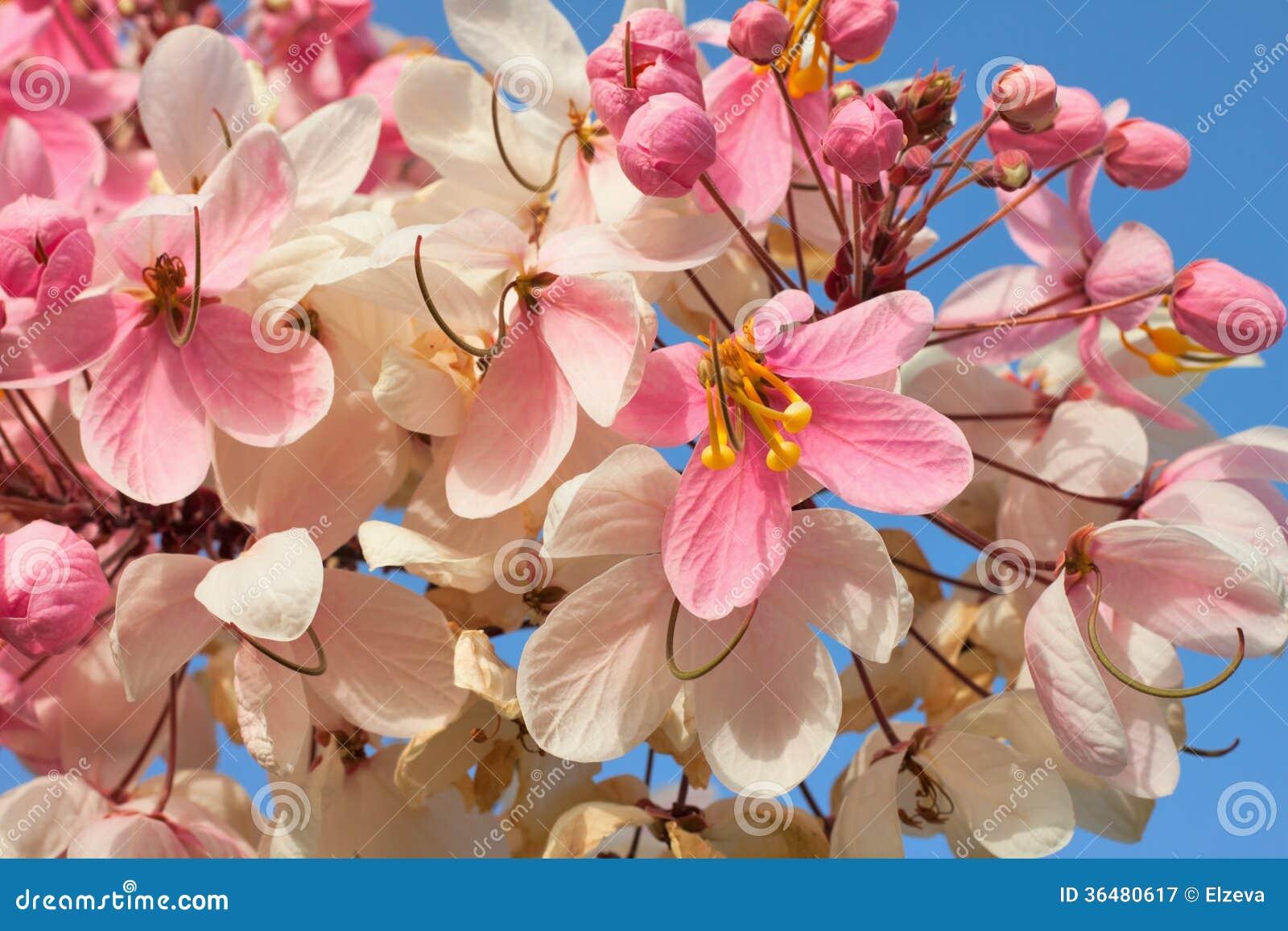 Gałąź tropikalni kwiaty