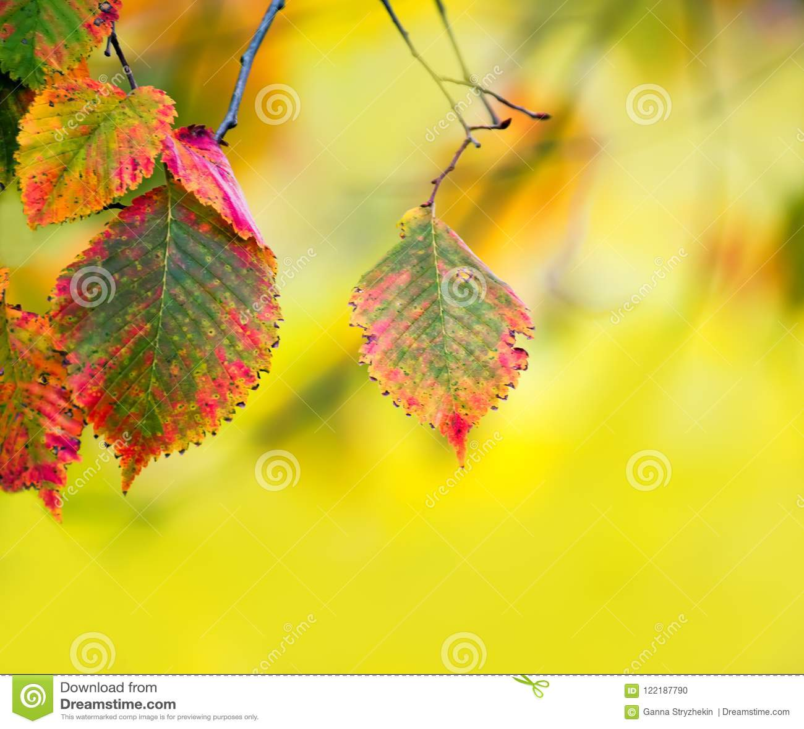Gałąź z jesień liśćmi