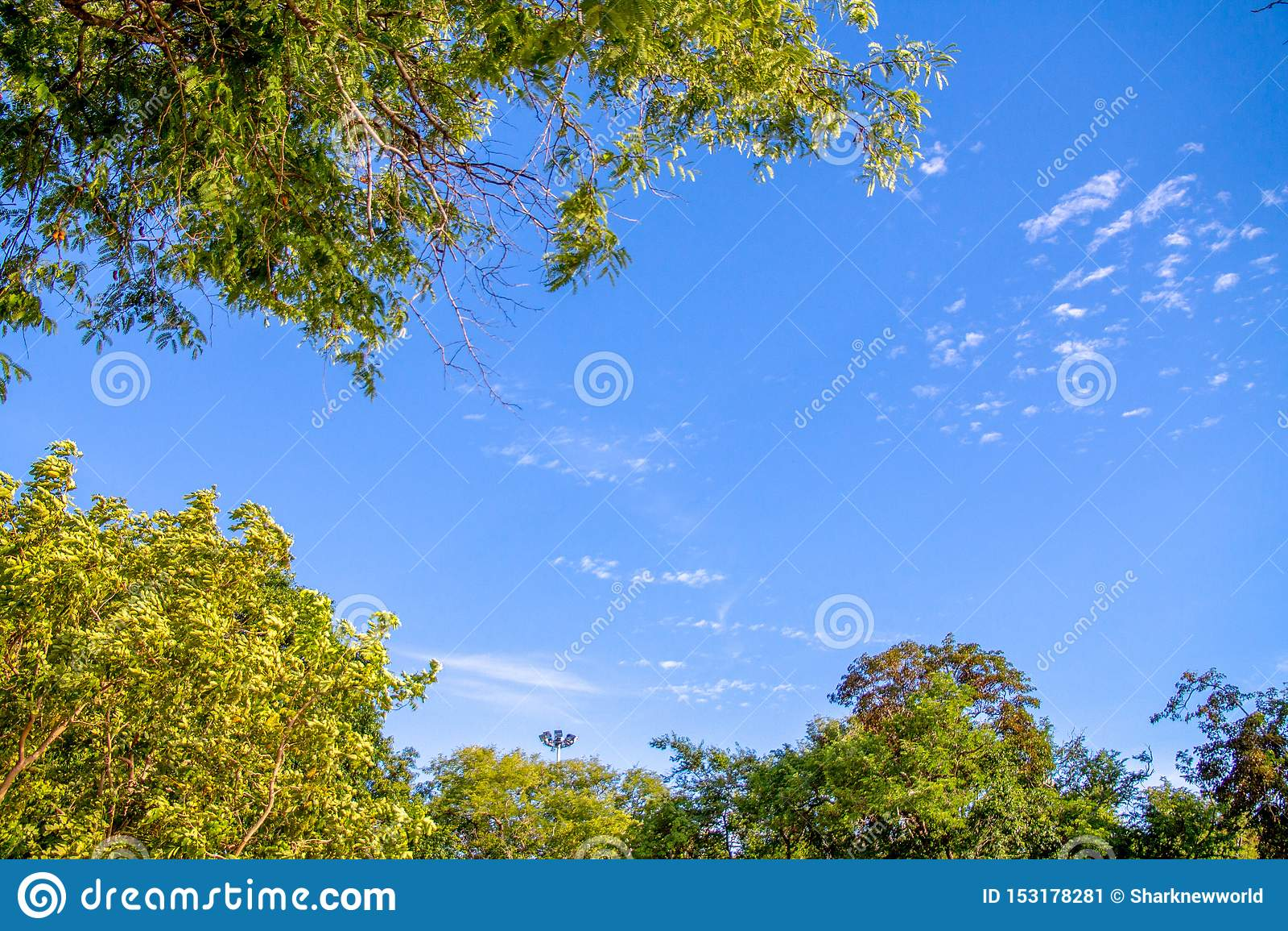 Gałąź z liśćmi przecina z niebieskim niebem