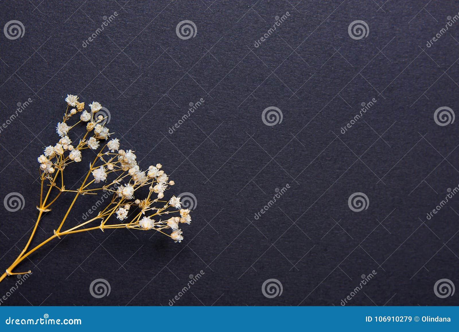 Gałązka Małego bielu Sucha wiosna Kwitnie na Czarnym tle w rocznika stylu Wielkanocy ` s Macierzysty dzień
