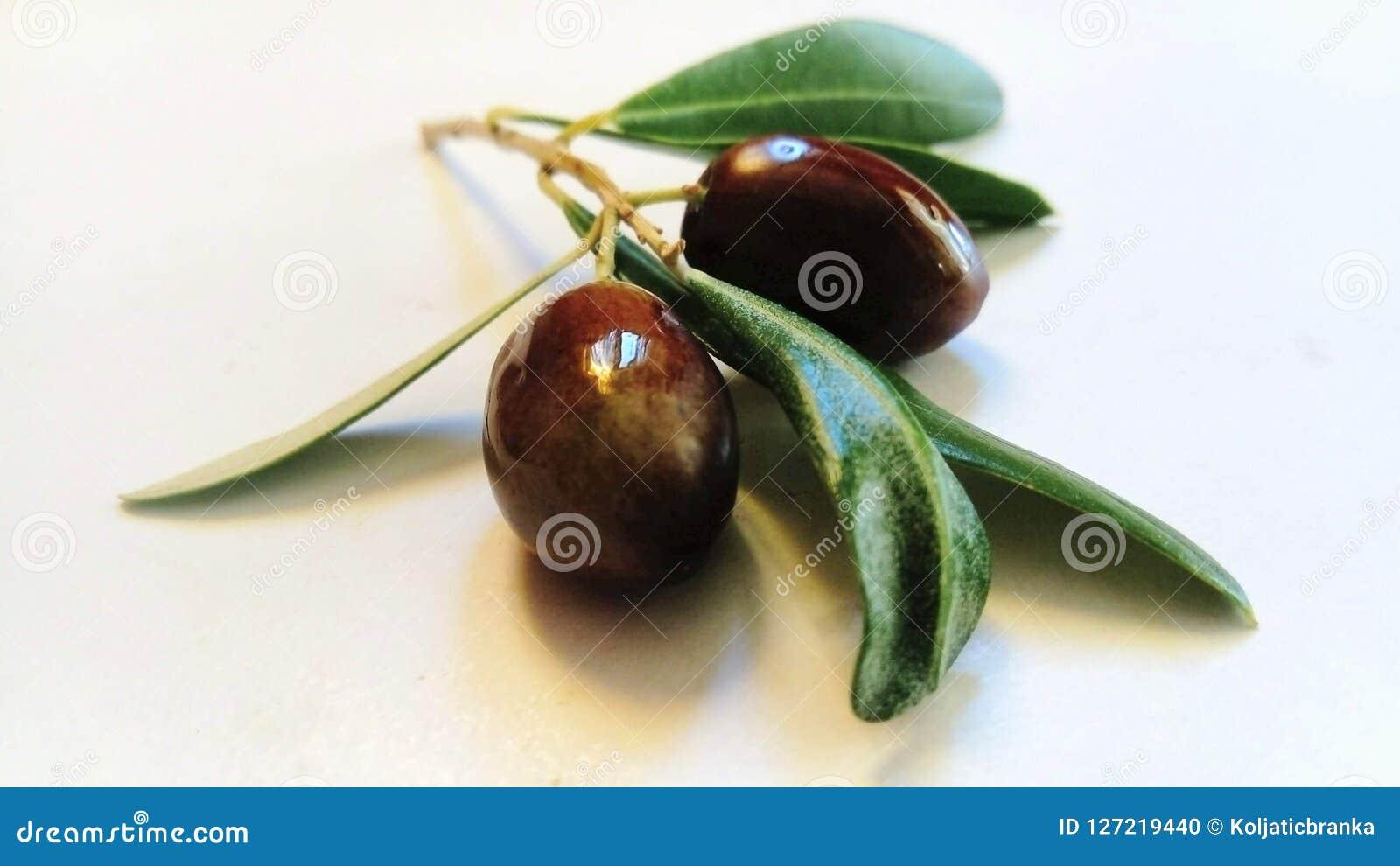 Gałązka oliwna z czarnymi owoc