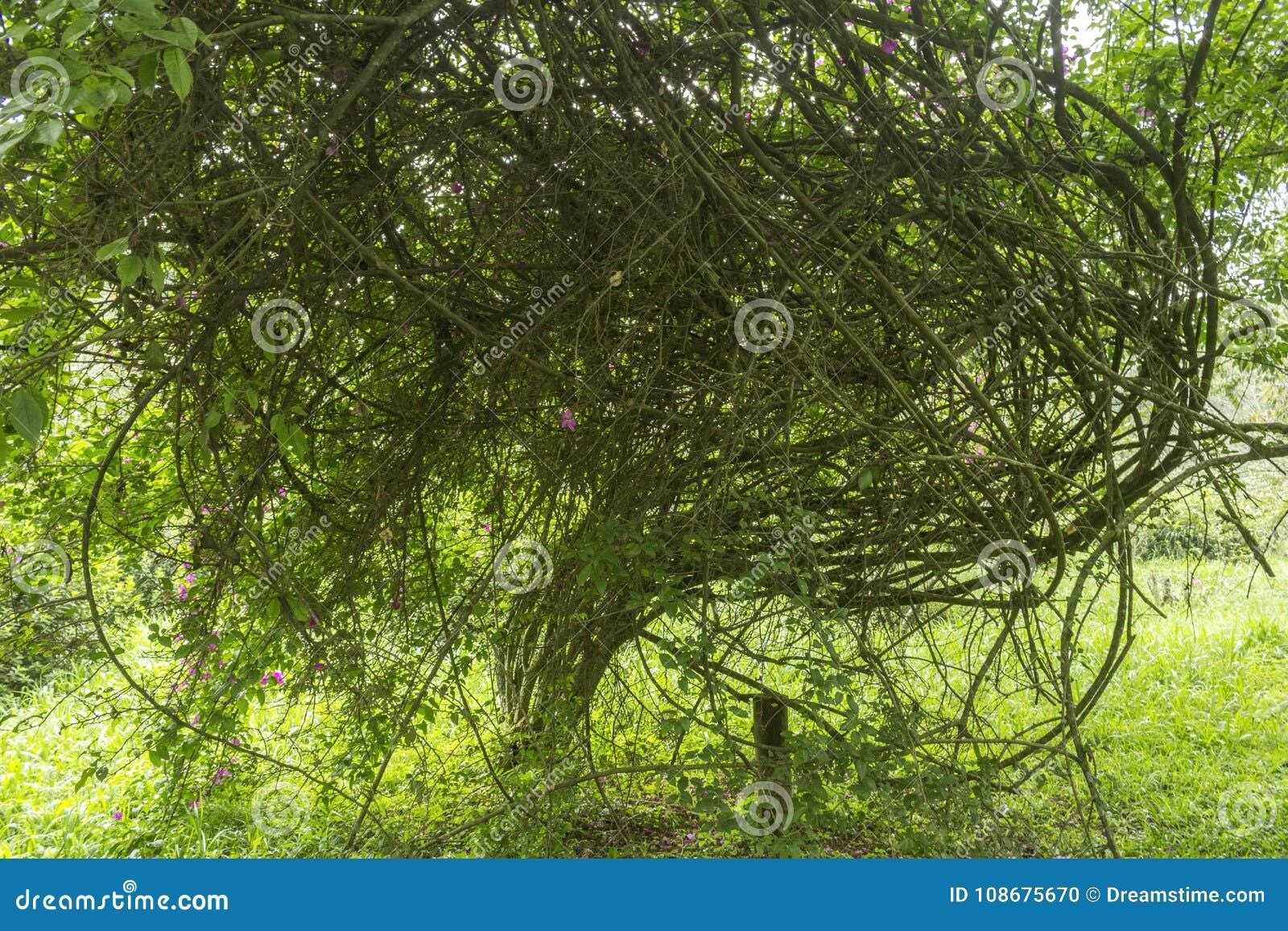 Gałązki, gałąź i liście troszkę