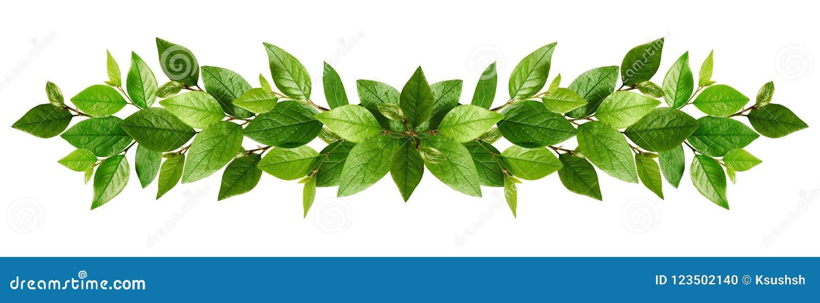 Gałązki z świeżymi zielonymi liśćmi w girlandzie