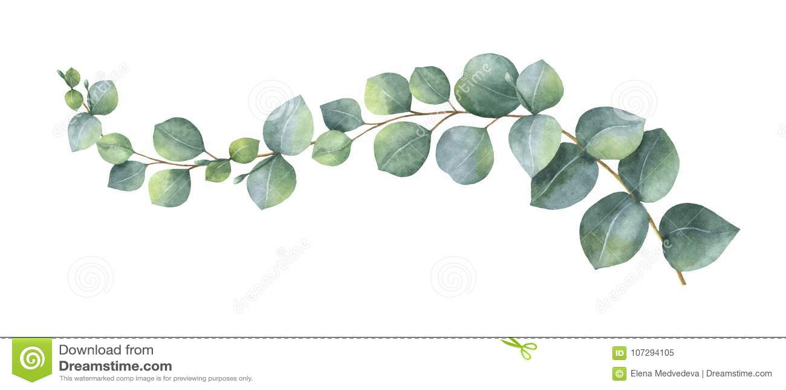 Gaat de waterverf vectorkroon met groene eucalyptus weg en vertakt zich