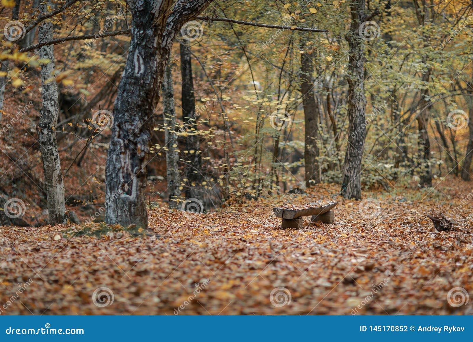 Gabarits en bois vides en parc d automne