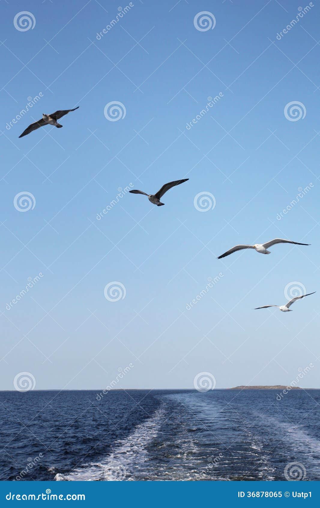 Download Gabbiani immagine stock. Immagine di becco, bianco, gabbiano - 36878065