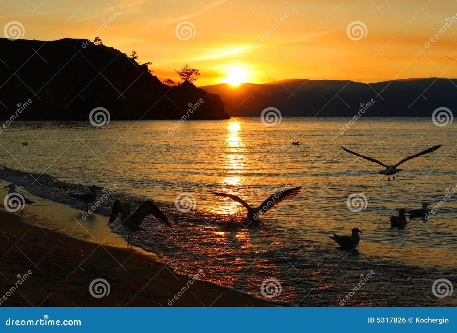 Download Gabbiani di Sun fotografia stock. Immagine di riflessione - 5317826
