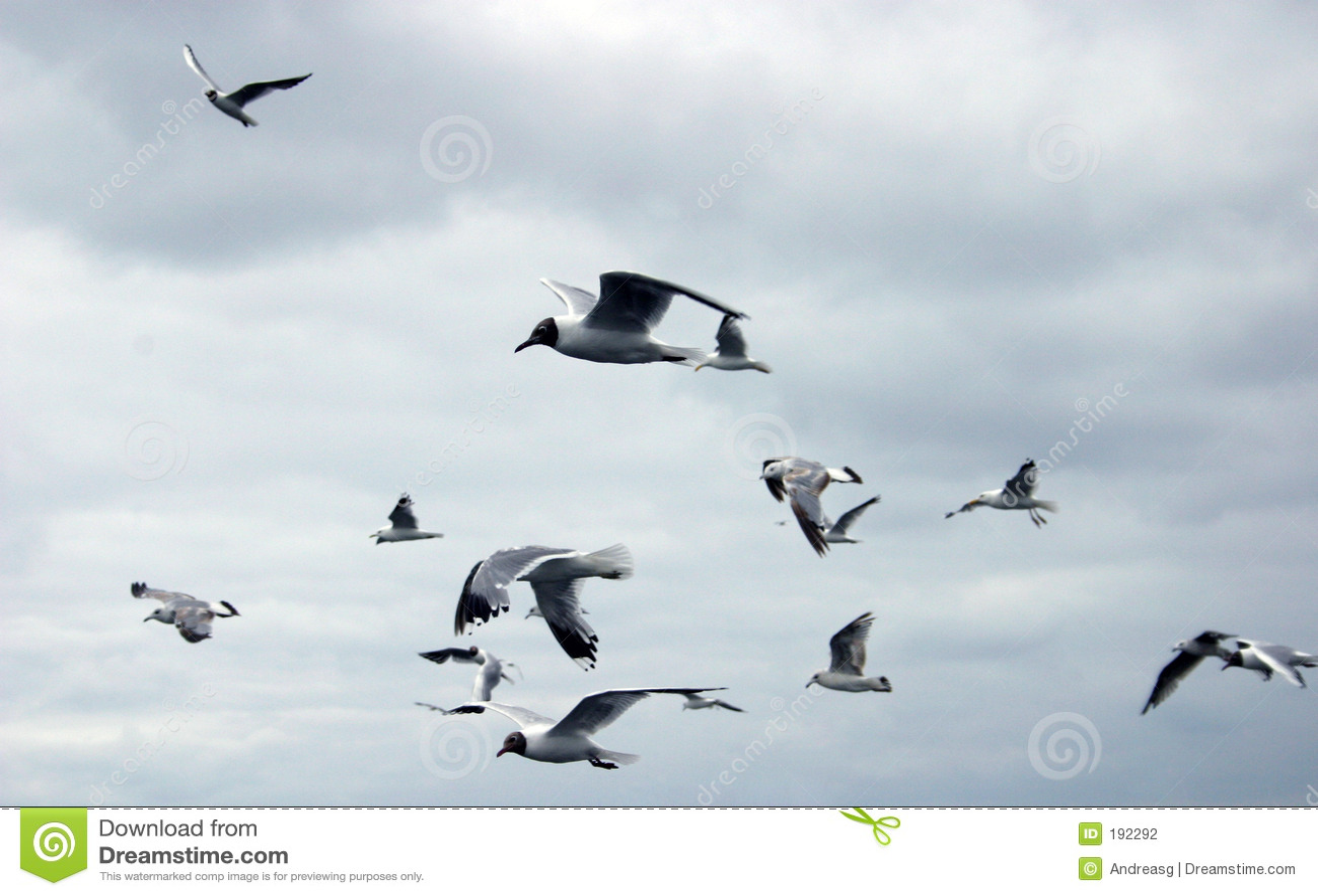 Gabbiani di volo