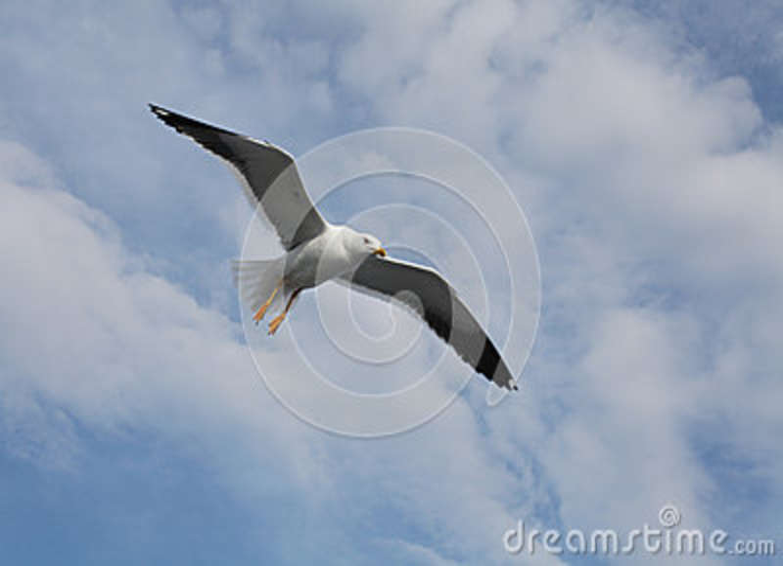 Download Gabbiano immagine stock. Immagine di mosca, aria, d0 - 36878305