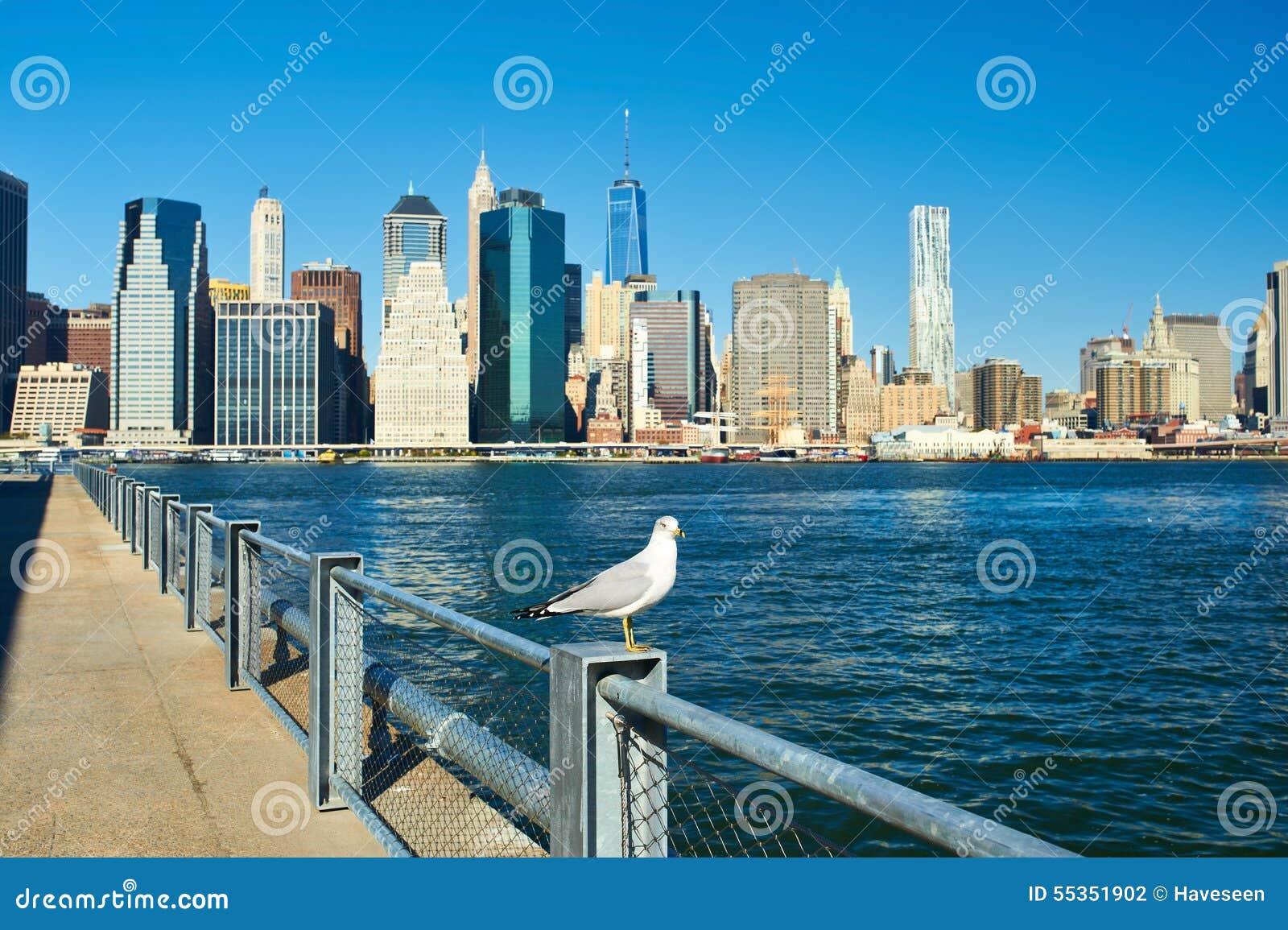 Gabbiano con Manhattan nel fondo Fuoco sull uccello