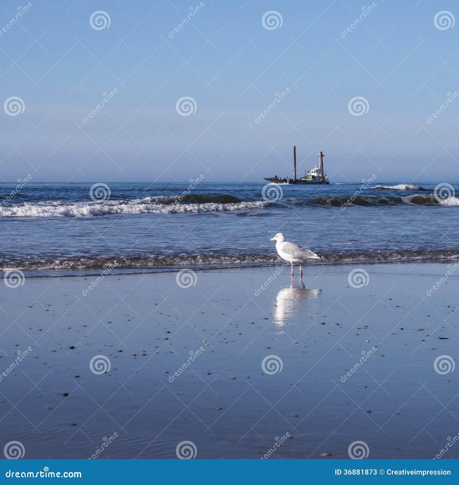 Download Gabbiano E Nave Alla Spiaggia Immagine Stock - Immagine di marittimo, nave: 36881873