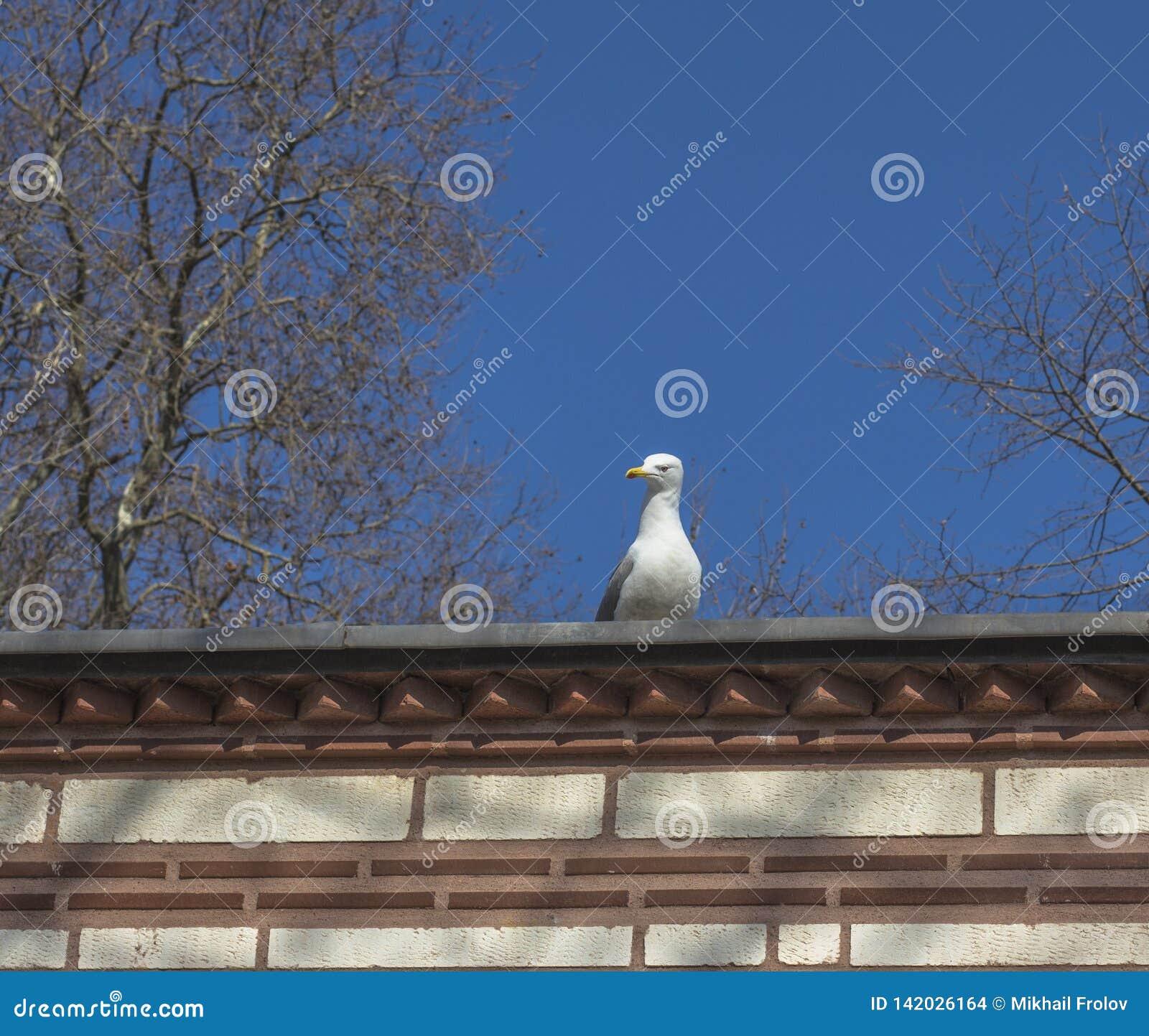 Gabbiano sul tetto e sul cielo blu