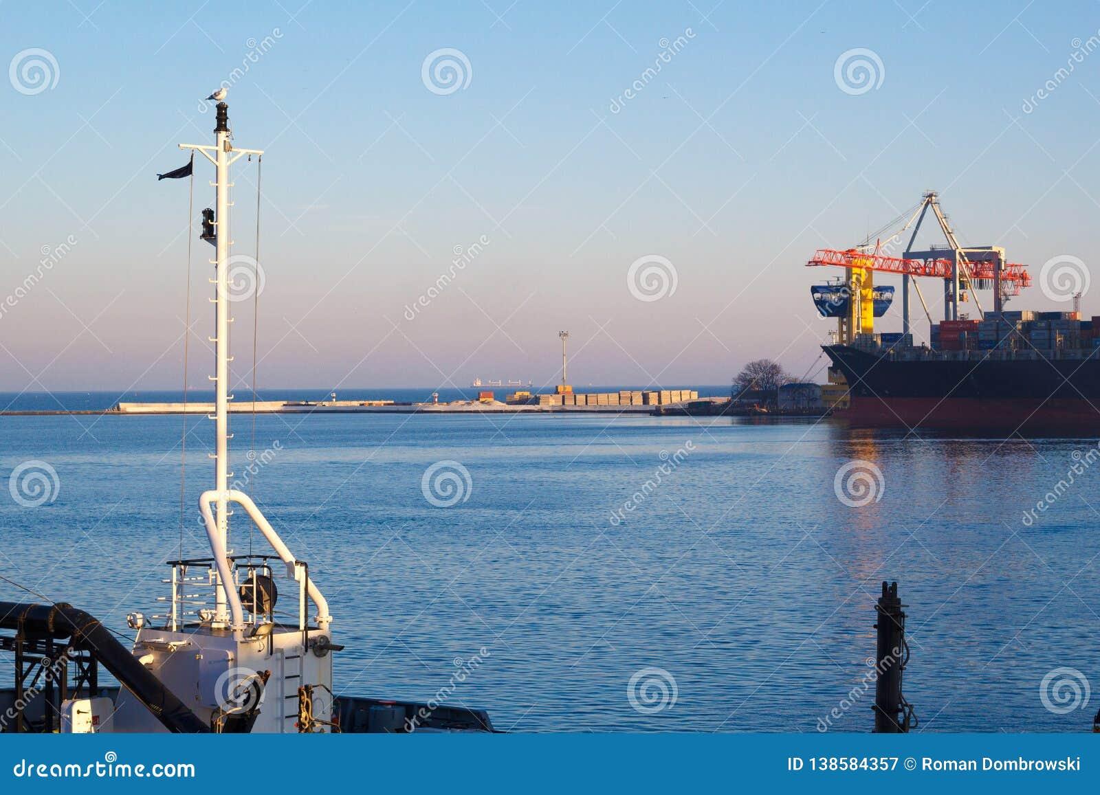 Gabbiano sull albero su un fondo del porto