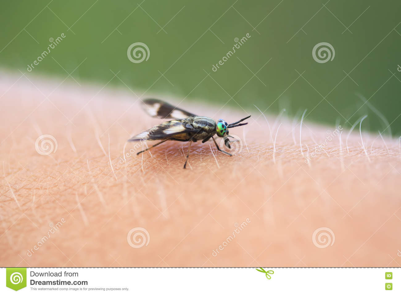 Gadfly - an insect attacking animals and humans. What to do when biting gadfly 89
