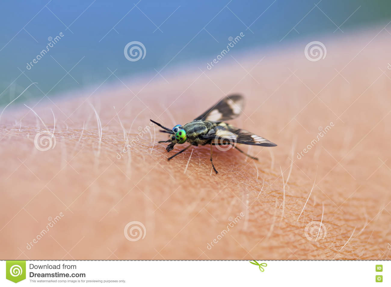 Gadfly - an insect attacking animals and humans. What to do when biting gadfly 59