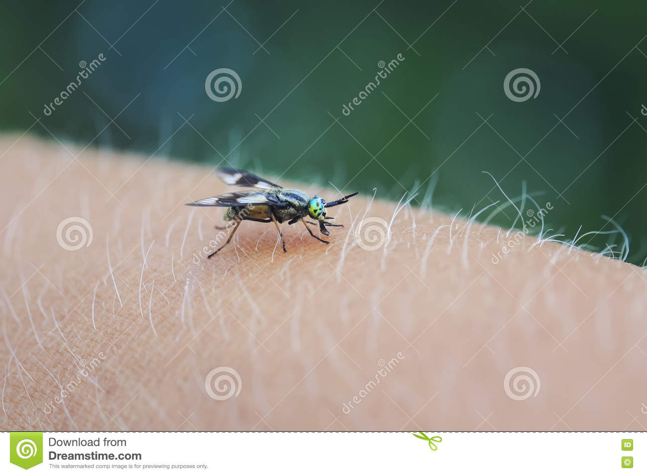 Gadfly - an insect attacking animals and humans. What to do when biting gadfly 85
