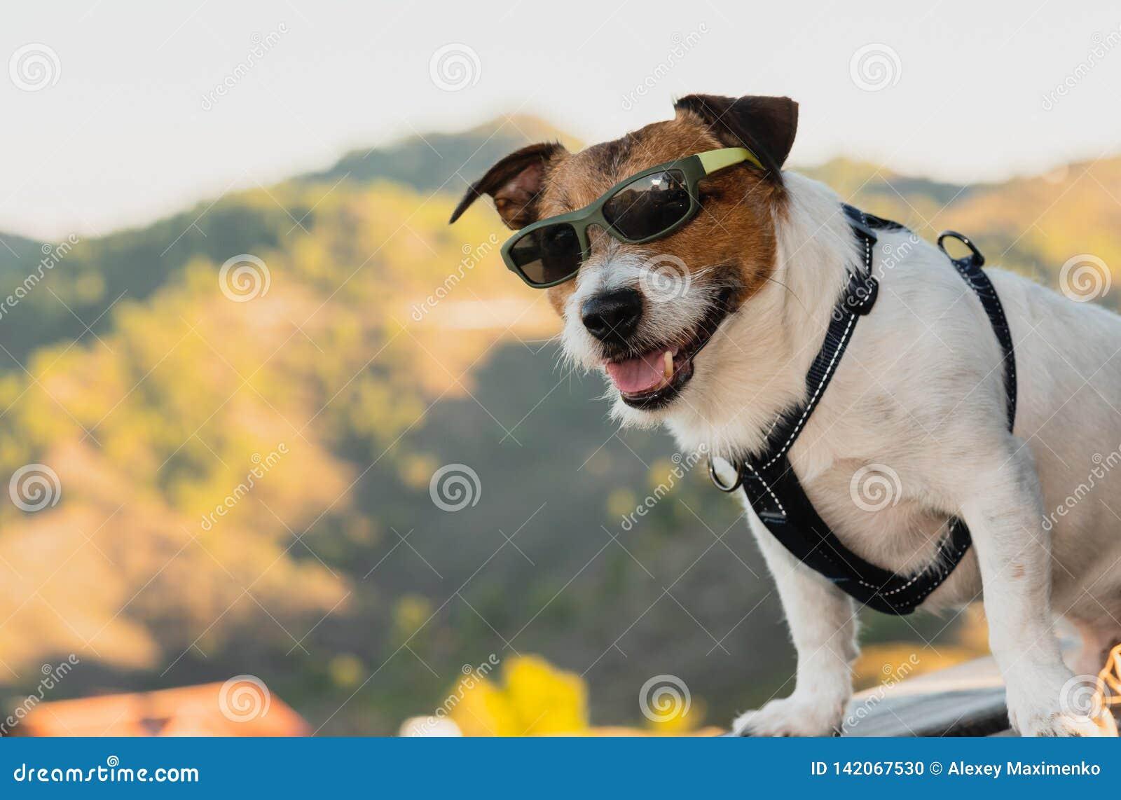 Gafas de sol que llevan del perro como turista feliz que presenta en el punto de observación en la parte superior de la montaña