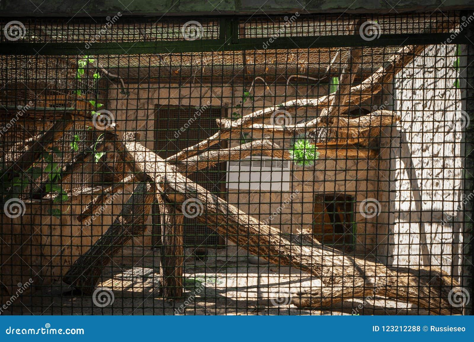 Gaiola vazia do jardim zoológico