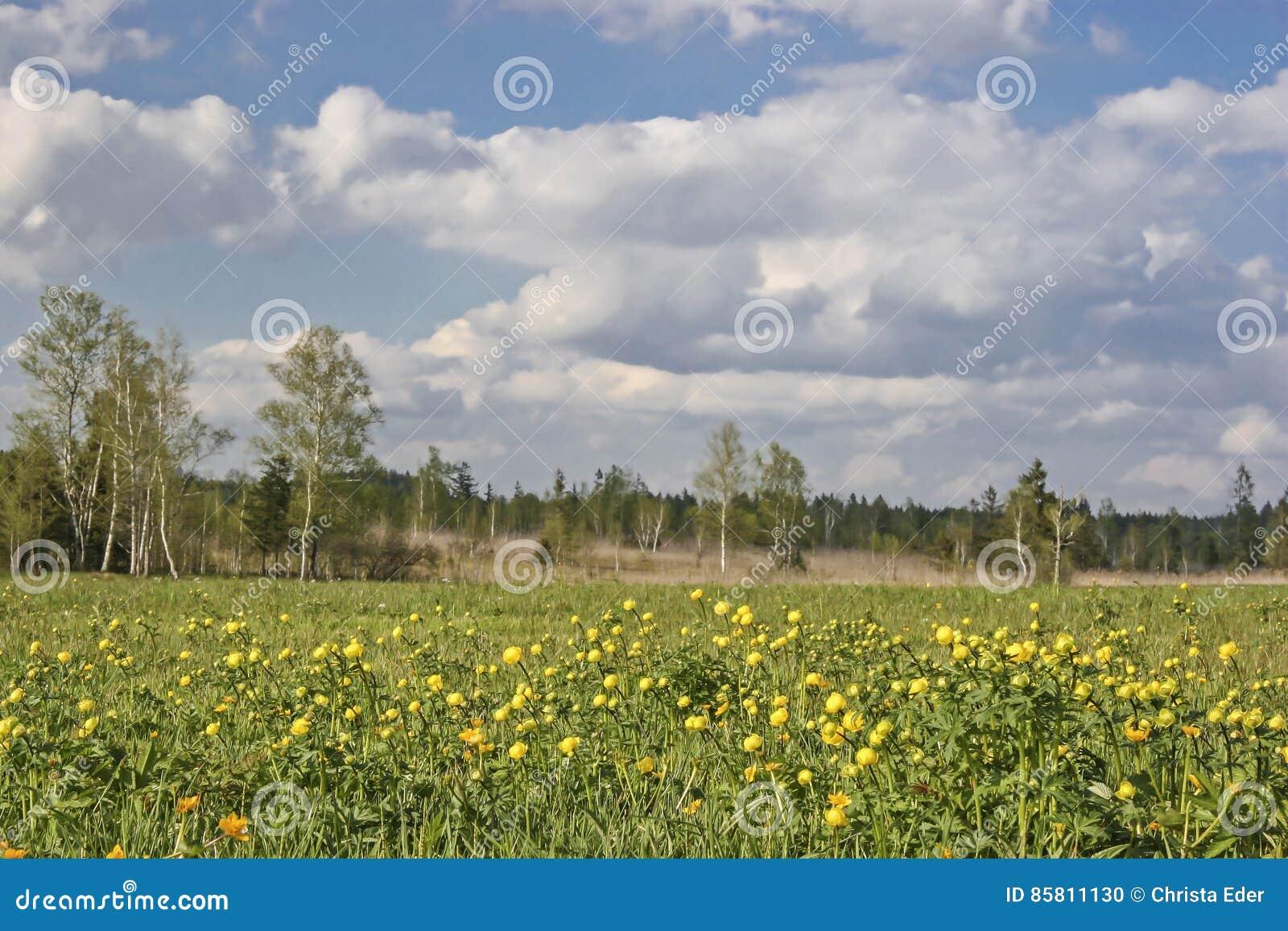 Gaissach amarrent au printemps