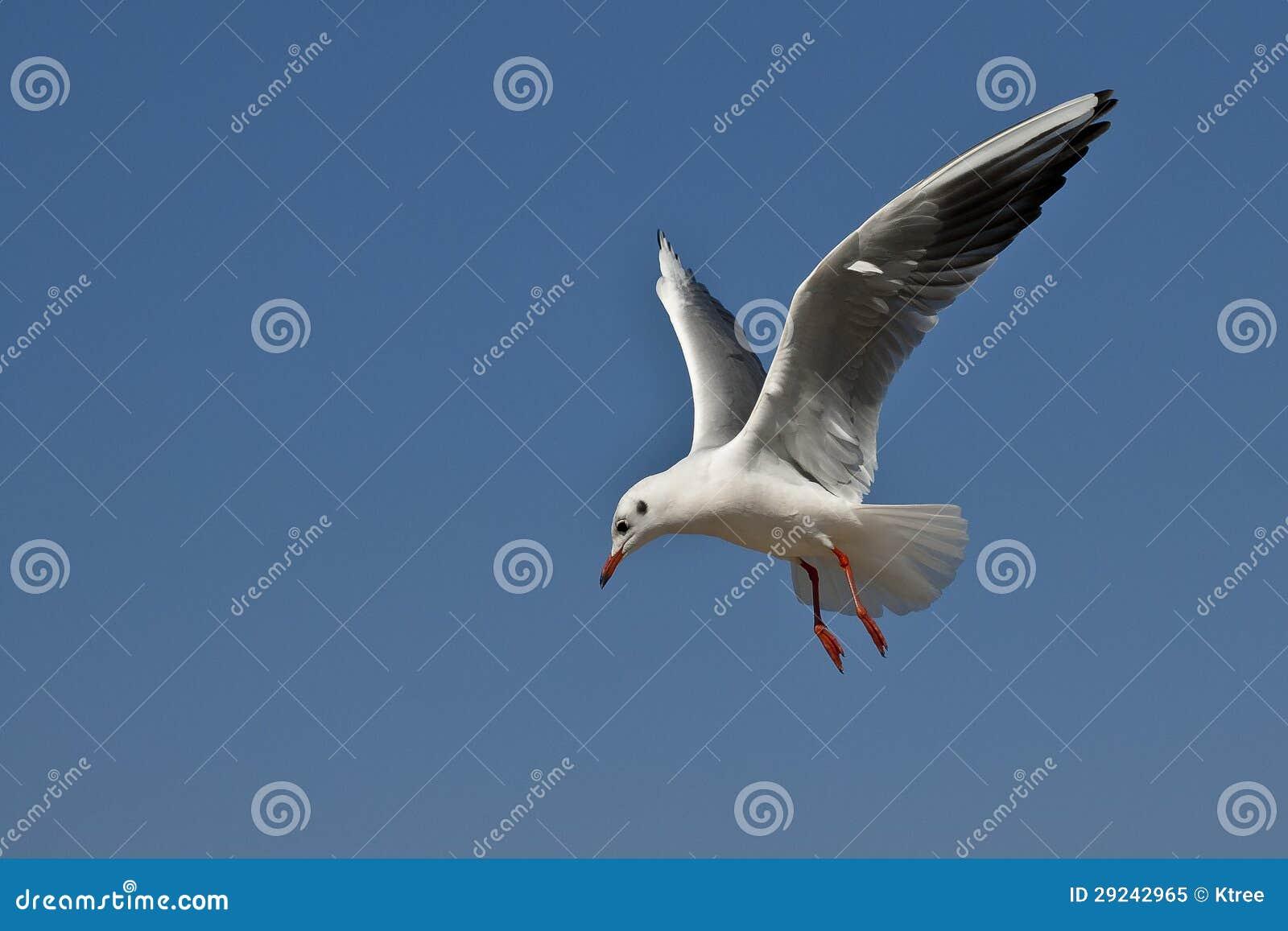 Download Gaivota ilustração stock. Ilustração de azul, fundo, vôo - 29242965