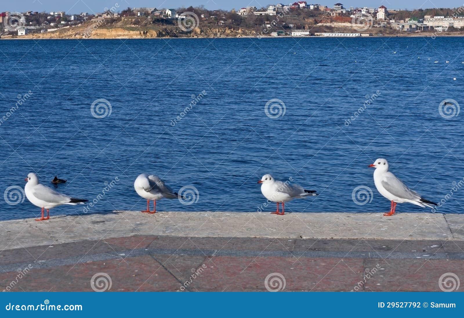 Gaivota de mar