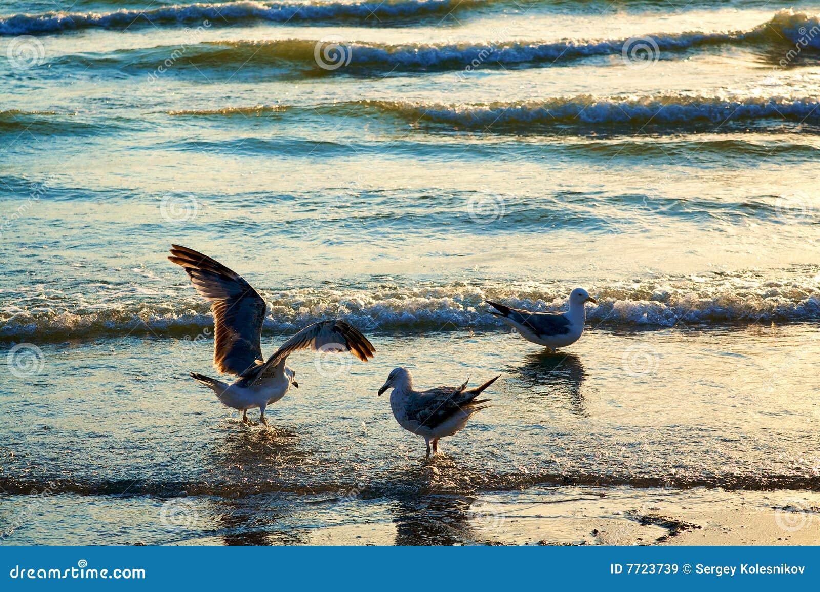 Gaivota de mar na costa