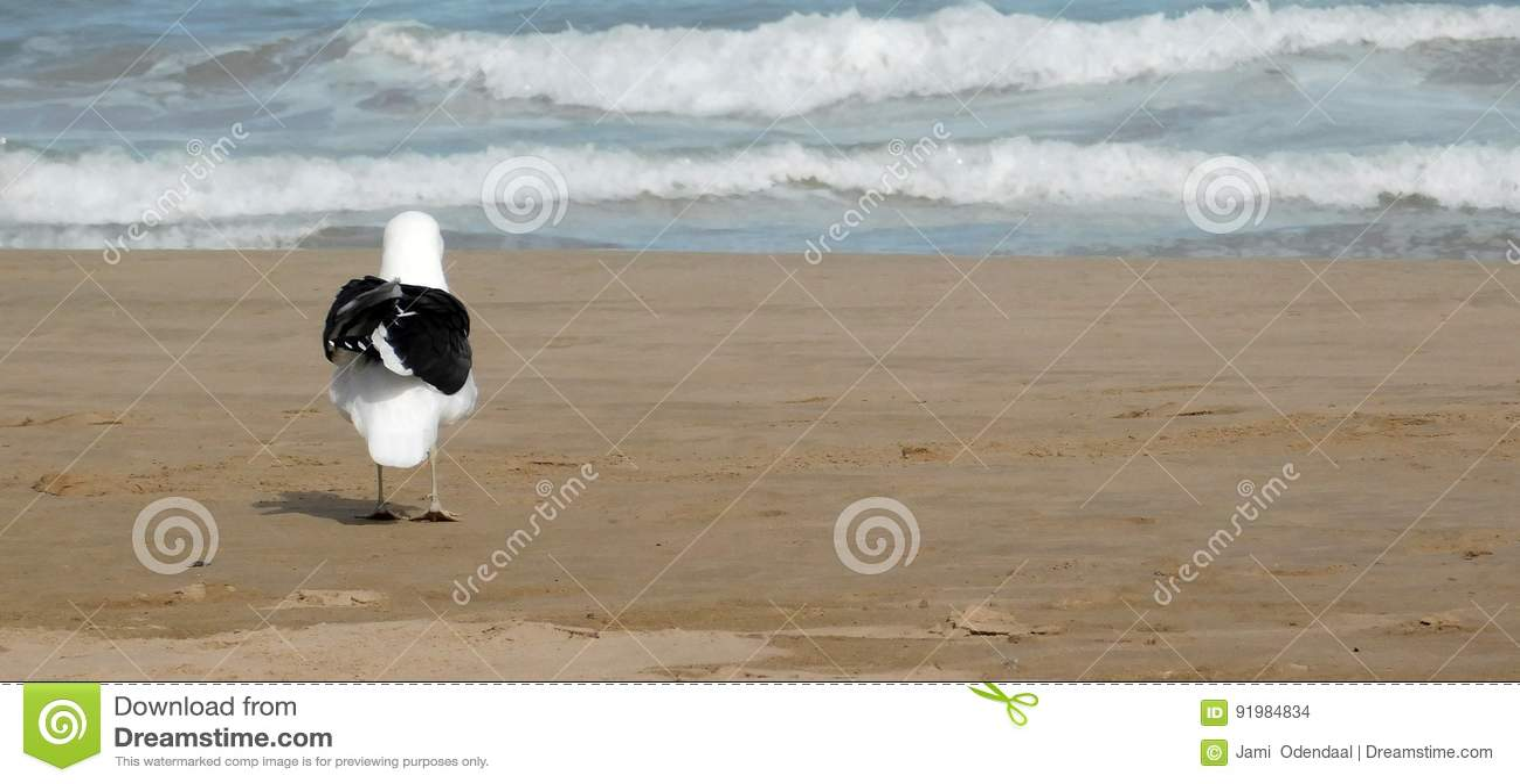 Gaivota na costa