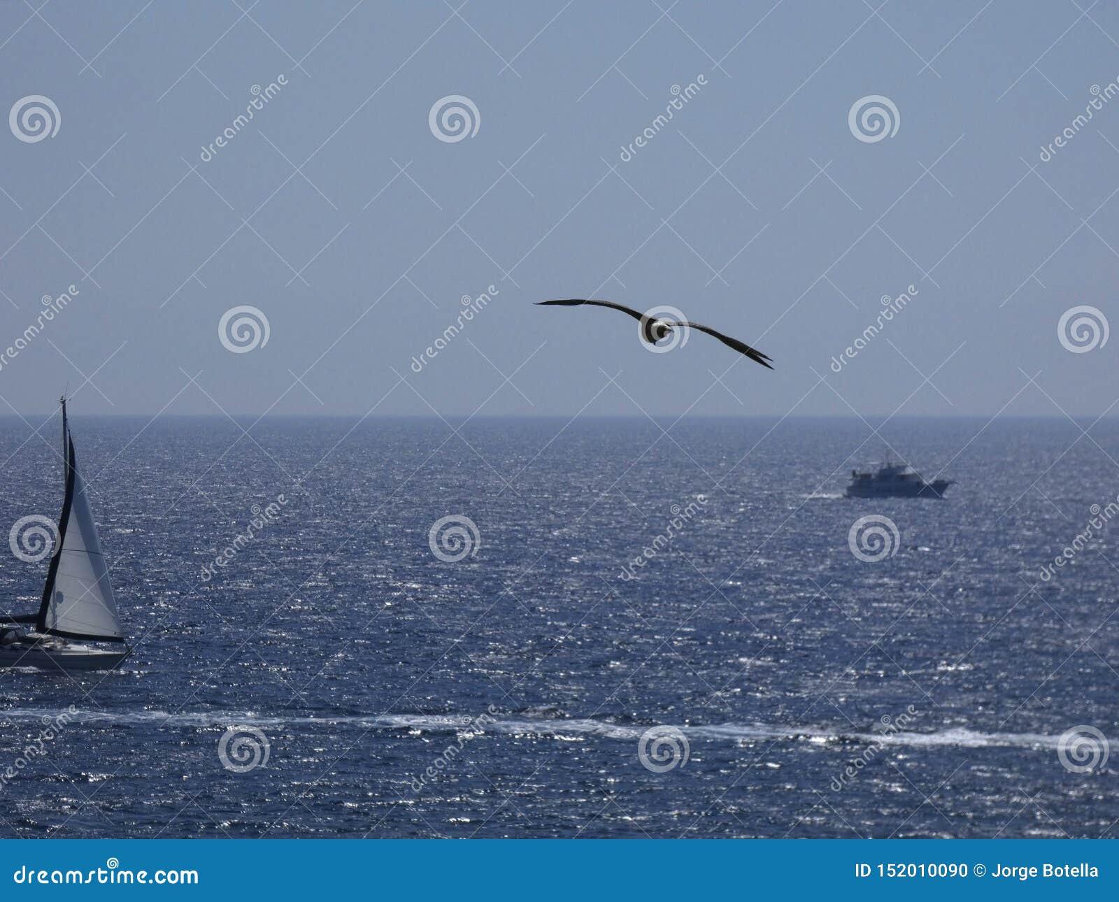 Gaivota que voa sobre o mar Mediterr?neo