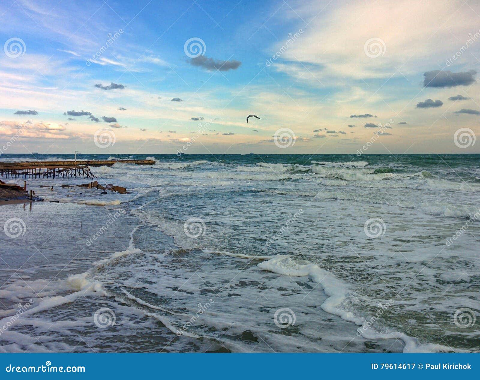 Gaivota sobre o mar raging