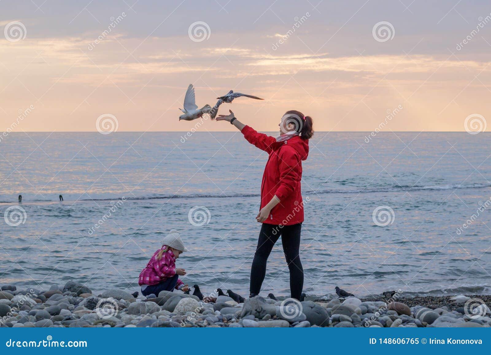 Gaivotas de alimentação da mãe e da filha na costa de mar
