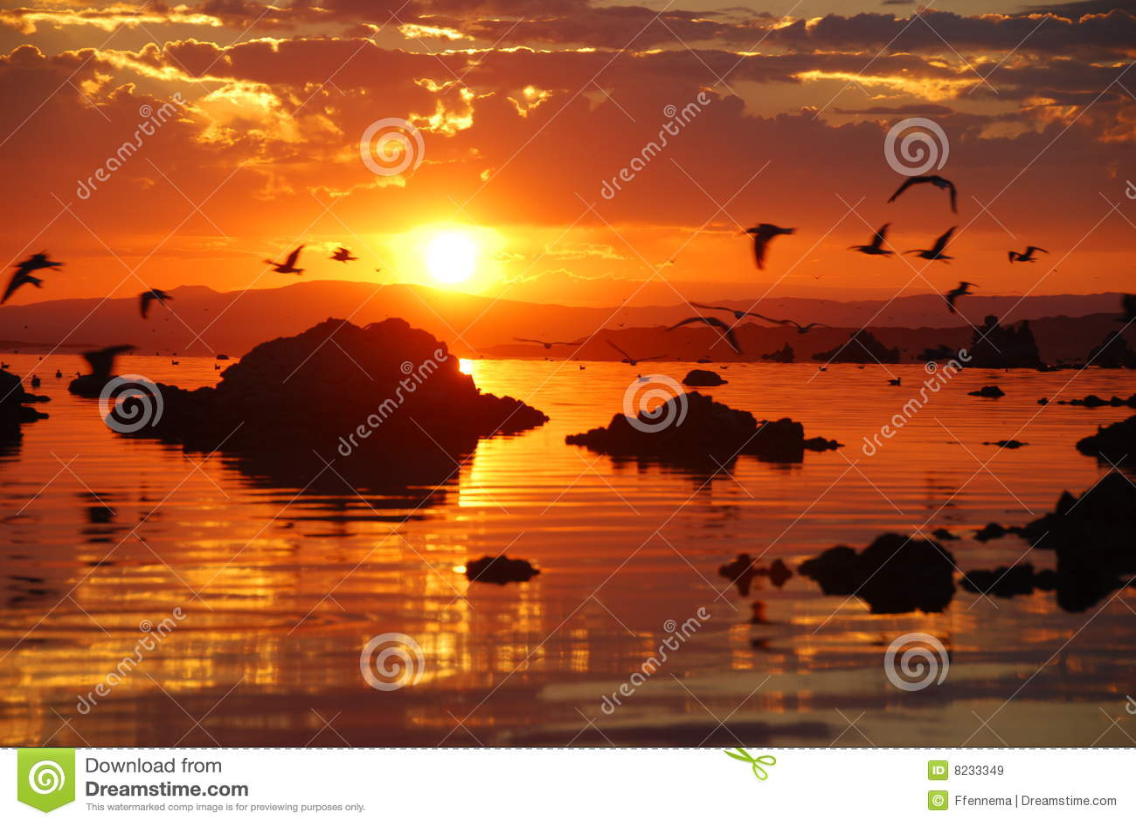Gaivotas que voam sobre o mono lago durante o nascer do sol